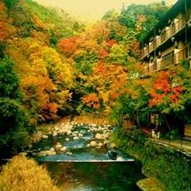 【秋】早川沿い紅葉の眺め