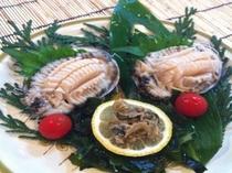 海女採アワビ。プリプリの食感がとても美味しい高級食材です。
