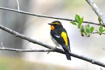 サンボア周辺の野鳥