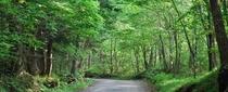 小滝への林道