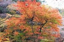 紅葉(庭)