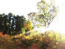 秋の朝日 庭から