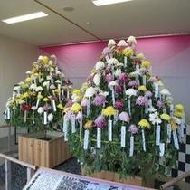百種接分菊