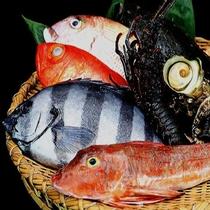 厳選した地魚君たちが奏でるオーケストラ演奏を毎日開催しています☆ 鑑賞してみませんか・・☆
