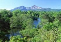 新緑の中瀬沼