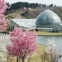 『新潟県立植物園』≪当館より車で約60分≫