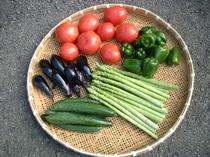 自家栽培夏野菜