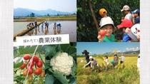 自家製野菜の収穫(農業体験)