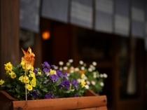 外観先に咲くお花