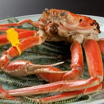 三国港タグ付き越前蟹