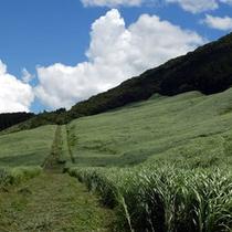 仙石原 台ヶ岳