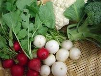 地物の新鮮野菜