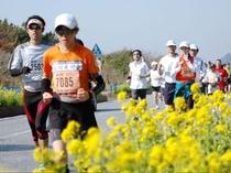 早春の平砂浦フラワーライン・若潮マラソン