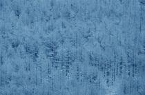 唐松の霧氷