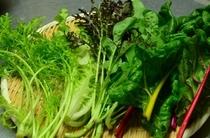 いろんな新鮮野菜