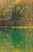 東山魁夷で有名な御射鹿池は秋もきれいです