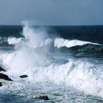 日本海ならではの波も見ごたえあります!
