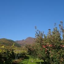 紅葉の高社山(こうしゃさん)と実り豊かな果樹園(広大に続く葡萄畑とりんごの畑)