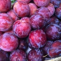 『よませ温泉朝市』にて夜間瀬の採れたて新鮮お野菜&果物を販売しております。(種類たくさん♪プラム)