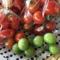 『よませ温泉朝市』にて夜間瀬の採れたて新鮮お野菜&果物を販売しております。(フルーツトマト夏)