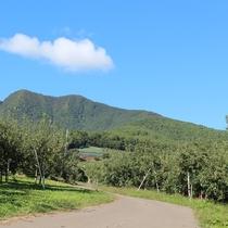 アクティビティ トレッキング&ハイキング よませの広大に広がる果樹園の田舎小径をごゆっくりどうぞ♪