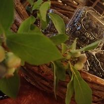 『よませ温泉朝市』にて信州の産直新鮮果物を販売しております。夜間瀬の大粒ブルーベリー(7月下旬頃)