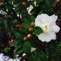 【花】 セランフラワーガーデン 冬