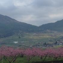 春の高社山麓