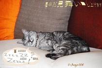 マオちゃん‥ソファ
