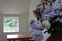 館内ホールの紫陽花