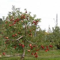 なぜ伊豆高原でリンゴがお風呂に浮かんでいるのか?その1
