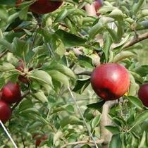 なぜ伊豆高原でリンゴがお風呂に浮かんでいるのか?その2