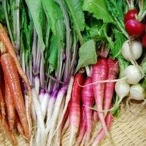 夕食・オードブルは新鮮野菜たっぷりの野菜盛り合わせ