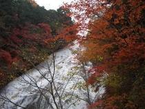 秋の奥日光湯滝