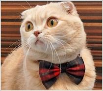 猫ちゃんプラン2