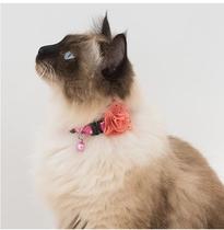 猫ちゃんプラン