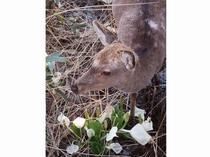 子鹿と水芭蕉