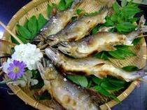 【お料理】やはり一度は召し上がっていただきたい、鮎の塩焼き。那珂川の鮎をご賞味ください。