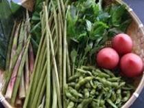 夏の食材例(月山竹・蕗・青みず・だだちゃ豆・トマト)