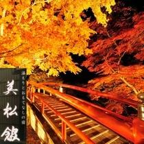 ★秋の風物詩★河鹿橋のライトアップ(10/18〜11/20)今年も懸命に生き抜いた草木達の晴れ舞台です。