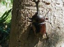 自然いっぱいのペンションの周りに、かぶと虫やくわがた虫がいるよ!