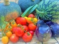 ペンションの無農薬畑で作った夏野菜です。