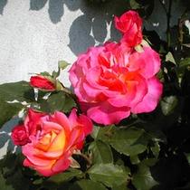 *【周辺】黒姫高原では、バラをはじめ季節の花が楽しめます。