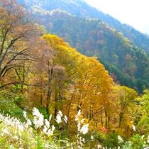 *【周辺】秋から冬へと移り変わる時期の三段紅葉(山頂の雪、中腹の紅葉、裾野の草原)が特に美しいです。