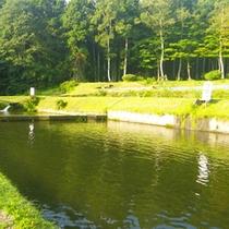 *【周辺】目の前にある養殖池。臭みのない川魚はきれいな清流で育てています。