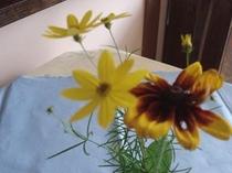 夏の花を飾っておもてなし