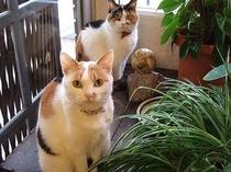 ニューモンドの猫たち