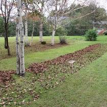 庭の落ち葉集め