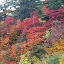 松川大橋の紅葉