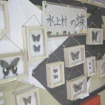 【水上村の蝶】珍しい蝶が多数生息しています